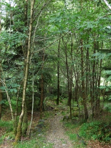 One of the paths on the red route, 9 July 09.